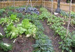 Resultado de imagem para vegetais em casa